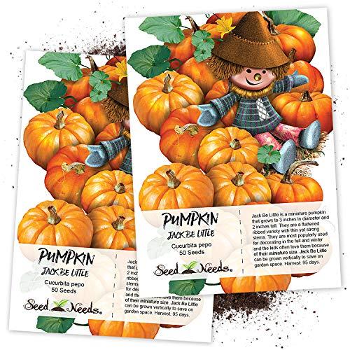 Seed Needs, Jack Be Little Pumpkin (Cucurbita pepo) Twin Pack of 50 Seeds Each NON-GMO (Best Giant Pumpkin Seeds)