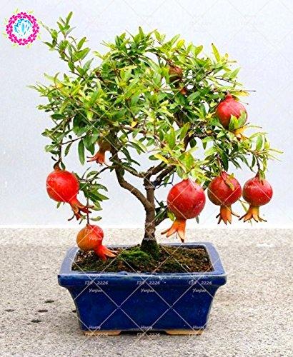 Seed 50pcs/Bag Pomegranate Plant Delicious Fruit Bonsai Plant Perennial Indoor Fruit Tree Family Decorative Ornamental Plants.