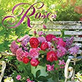Roses 2019 12 x 12 Inch Monthly Square Wall Calendar, Flower Floral Plant Outdoor Nature Gardening (Multilingual Edition)
