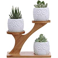 3pcs Owl Succulent Pots with 3 Tier Bamboo Saucers Stand Holder - White Modern Decorative Ceramic Flower Planter Plant…