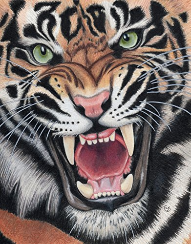 Tiger Angry Sumatran Snarling Wild Cat Jungle 8.5''x11'' Colored Pencil Drawing Painting Sherry Goeben Art by Sherry Goeben Art