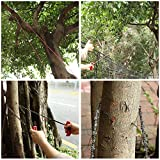 Hand Chain Saw for High Limb Tree Branch with 50