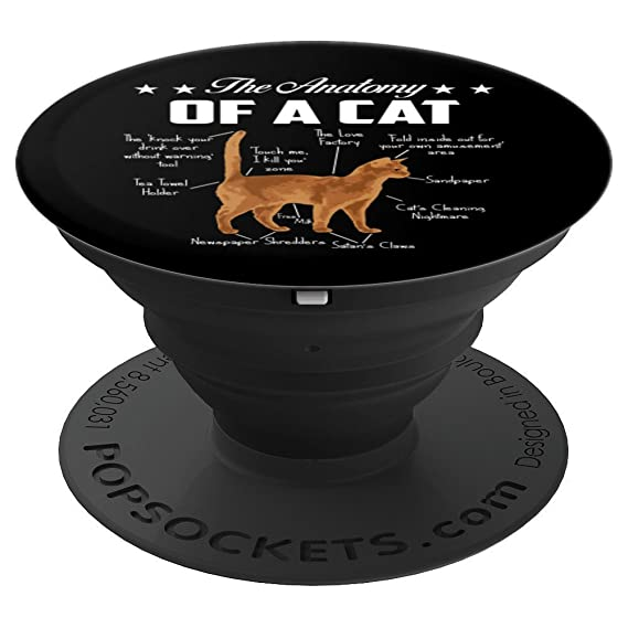 Amazon Kitten Grip The Anatomy Of A Cat Funny Cat Lover