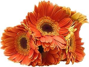 ELITE FLOWERS Assorted Bunch 7 Stem, 1 EA