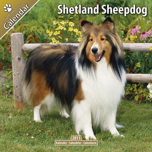 Sheepdog 2011 Calendar - Shetland Sheepdog 2011 Wall Calendar #10071-11