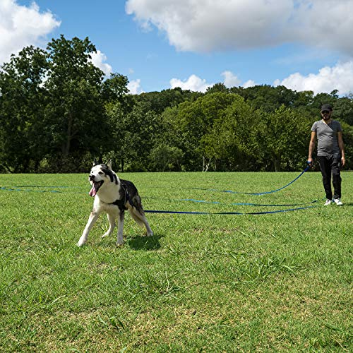 Dog Training 101: Tips & Tricks for Better Behavior