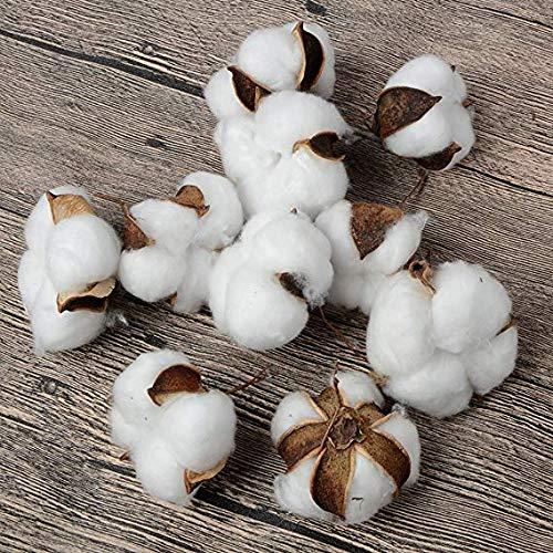 Takefuns 10 Pack Artificial Cotton Natural Cotton Head Boll Wire Iron Stem DIY Flower Arrangement Props Home Wedding Hotel Party Décor Photo (Photos Flower Arrangements)