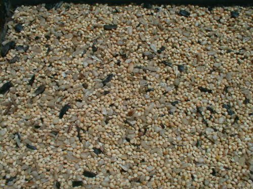 25 Lb Nyjer Seed - 7