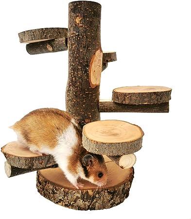Escalera de Caracol de Madera de Apple Escalera, Gimnasio para Mascotas Parque Infantil Pequeñas Mascotas Juguetes para Masticar para Sugar Glider Ratón Chinchilla Rata Jerbo,M: Amazon.es: Hogar