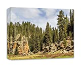 Southwestern Wall Art Living Room Photo Nature Photography Canvas New Mexico 'Jemez Forest'