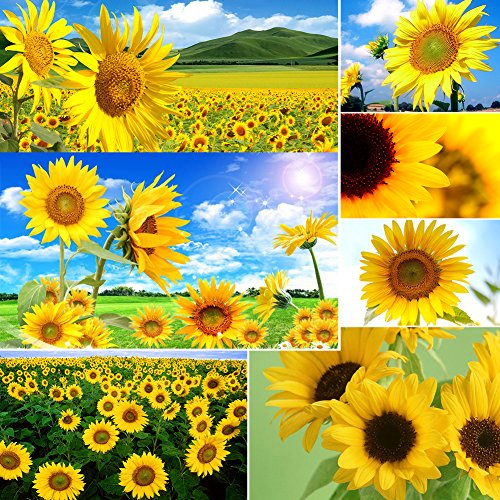 Afco 40Pcs Giant Yellow Sunflower Flower Seeds Annual Seed