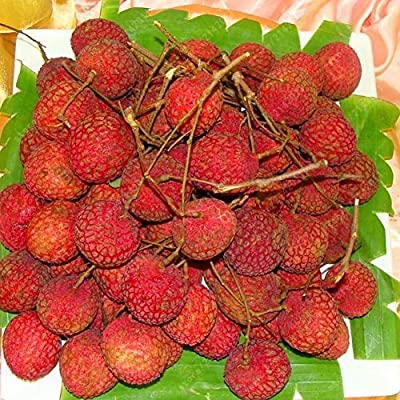 ocijf179 Seed, 20Pcs Litchi Seeds Liquique Lychee Garden Bonsai Planting Rare Fruit Tree Plant, Non-GMO, Rich in Vitamin C, US Original Production Fruit Seed Litchi Seeds : Garden & Outdoor