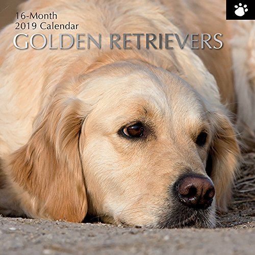 2019 Wall Calendar - Golden Retriever Calendar, 12 x 12 Inch Monthly View, 16-Month, Dogs and Pets Theme, Includes 180 Reminder Stickers