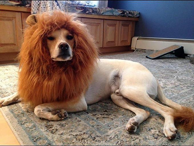 OMG Adorables Disfraz de Melena de león para Perro: Amazon.es ...