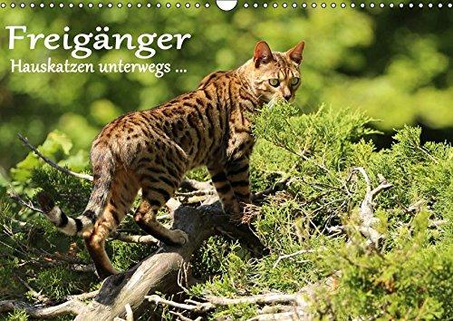 Wandkalender 2019 DIN A2 quer Hauskatzen unterwegs Freigänger Monatskalender, 14 Seiten CALVENDO Tiere : Hauskatzen in freier Natur Werner Schmäing 3669895701 Biologie // Sonstiges Bengale