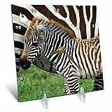 3dRose dc_9859_1 Common Zebra Kenya Africa 2-Desk Clock, 6 by 6-Inch