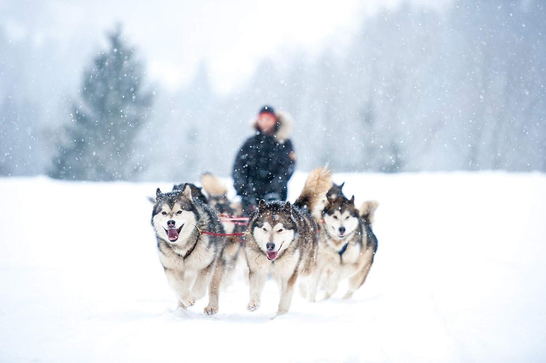 LasaLine Hunde Zuggeschirr X-Back f/ür Canicross Bike-,Ski-J/öring Scooter Schlitten Schwarz Neonorange