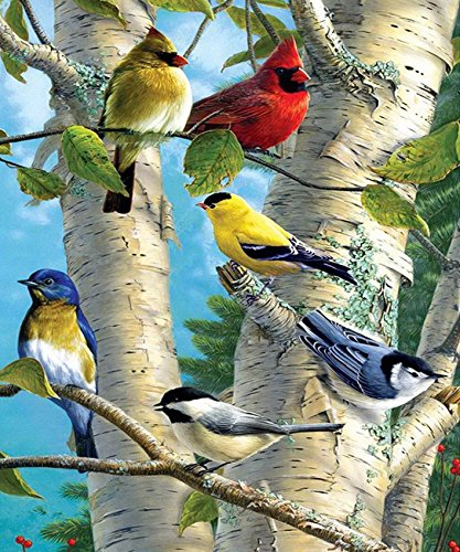 WOWDECOR Paint by Numbers Kits for Adults Kids, Number Painting - Red Yellow Blue Colorful Birds 16x20 inch (Framed)