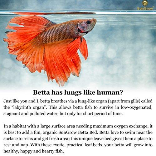 Betta Bed Leaf Hammock Reviews Amp List Best Deals Pet