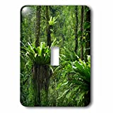 Danita Delimont - Forests - Indonesia, Bali. Green Tropical forest at Eka Karya Botanic Garden - Light Switch Covers - single toggle switch (lsp_225751_1)