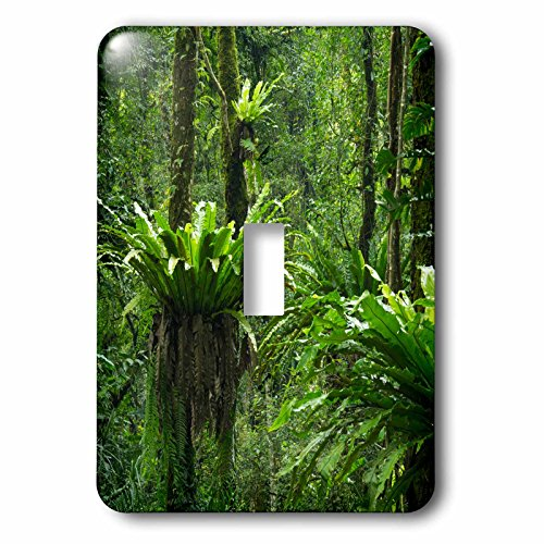 Danita Delimont - Forests - Indonesia, Bali. Green Tropical forest at Eka Karya Botanic Garden - Light Switch Covers - single toggle switch (lsp_225751_1) by 3dRose