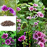 Portal Cool 50 Pcs Perennial Herb Mallow Plant Garden Beautiful Purple Flower Seeds Rlwh 01