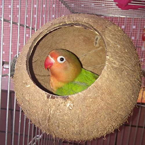 Hypeety Pet Bird Breeding Nest Coconut House Swing Ladder Toys Parrot parakeets Finches Hamster House Natural Nest Lovebird Cage Hanging Swing Perch (C:Coco Cage Perch Toy)