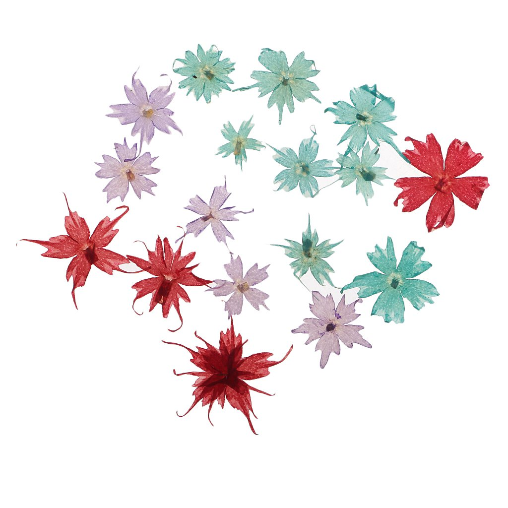 Homyl Beautiful Natural Pressed Dried Flowers Pressed Leaves For