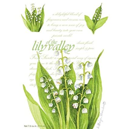 9c69575d92 Amazon.com: Fresh Scents Scented Sachets - Lily of the Valley, Lot of 6:  Sachets For Drawers Lily Of The Valley: Kitchen & Dining