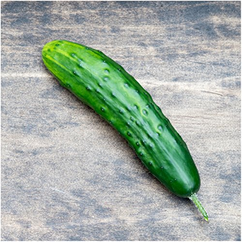Seed Needs, Cucumber Seed Collection (8 Individual Packets) Non-GMO