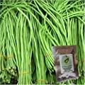 Premium Seeds-Yardlong Bean (Asparagus Bean, Snake Bean, Chinese Long Bean) 50+ Seeds Organic