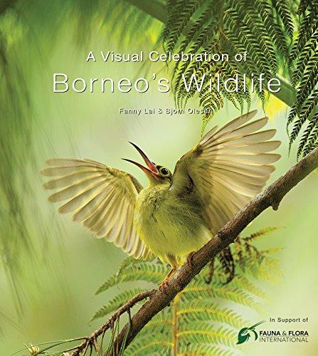 A Visual Celebration of Borneo