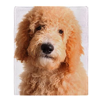 512723e84840 Amazon.com: CafePress Golden Doodle Puppy Soft Fleece Throw Blanket ...