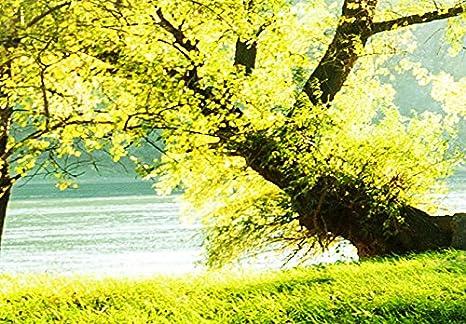 murando Quadro 200x100 cm 5 Pezzi Stampa su Tela in TNT XXL Immagini Moderni Murale Fotografia Grafica Decorazione da Parete c-B-0231-b-o Bosco Natura Albero