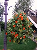 Scroll Trellis The only Solar lit Topiary Made, You add it to one Hanging Basket. 1 Accessory Solar Light Set (1, Green with Lights