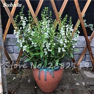 100 semillas piezas de Gypsophila mezcla Bonsai Hermosa Flor, románticos Gypsophila Paniculata Semillas, hermosa planta estrellada para jardín 10