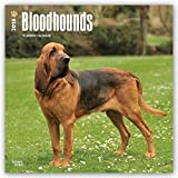 Bloodhounds 2018 12 x 12 Inch Monthly Square Wall Calendar, Animals Dog Breeds Hound