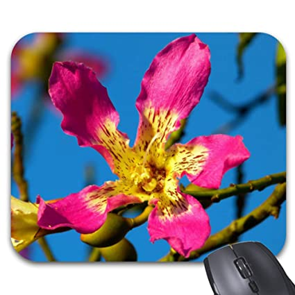 Amazon com : Beautiful Pink Kapok Tree Flower Mouse Pad 11 8 x 9 8