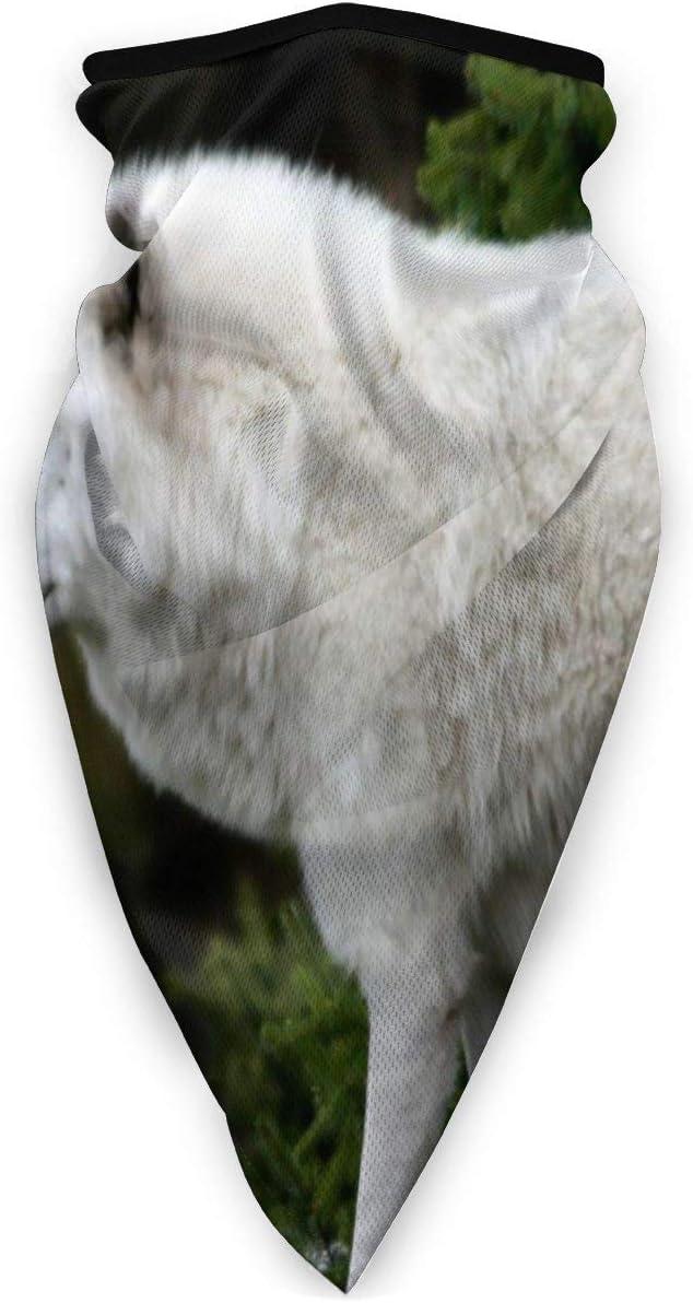 Traveler Polaina de Cuello Pasamontañas Mascarilla Transpirable ala de Caballo a Prueba de Viento Bufanda de Cuello Morado para exterior-U4-H8