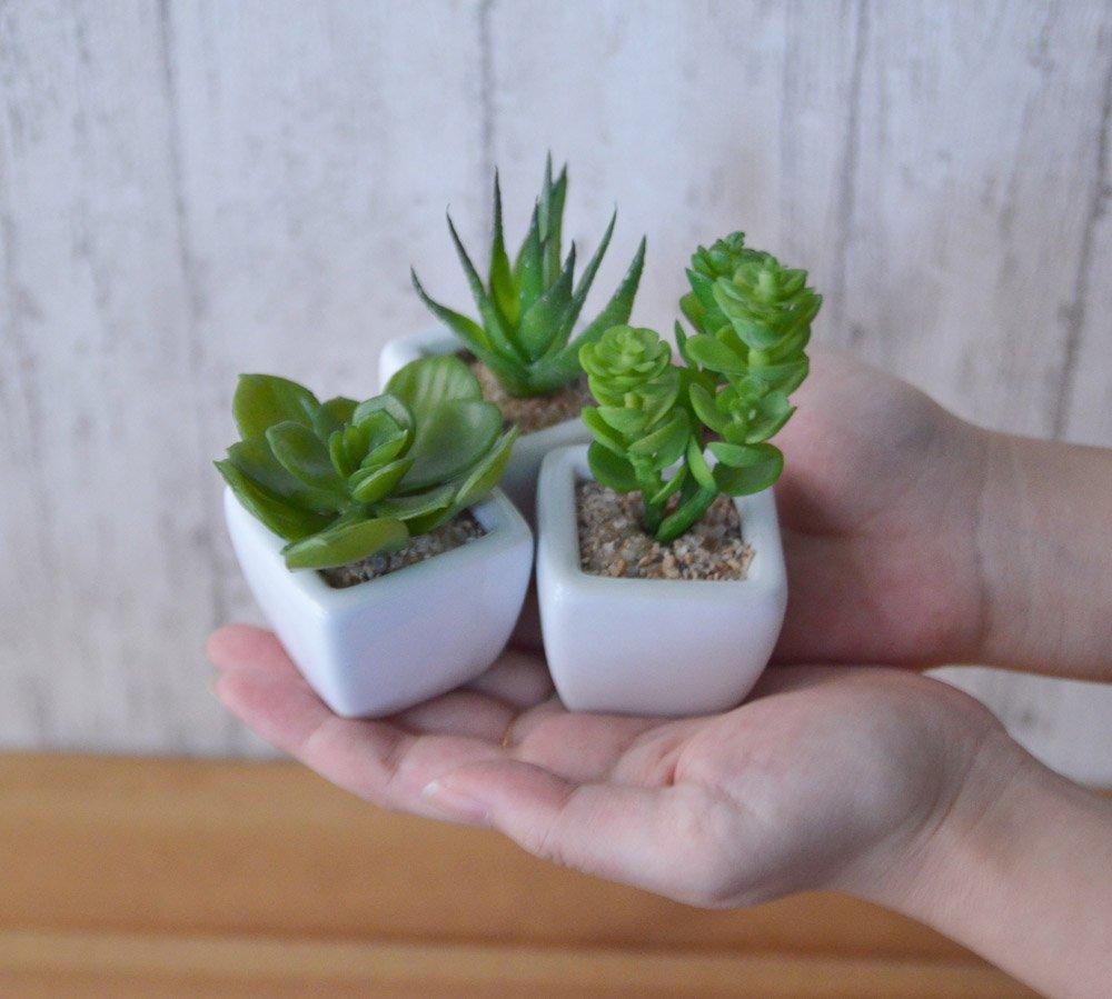 ミニ多肉植物3種セット