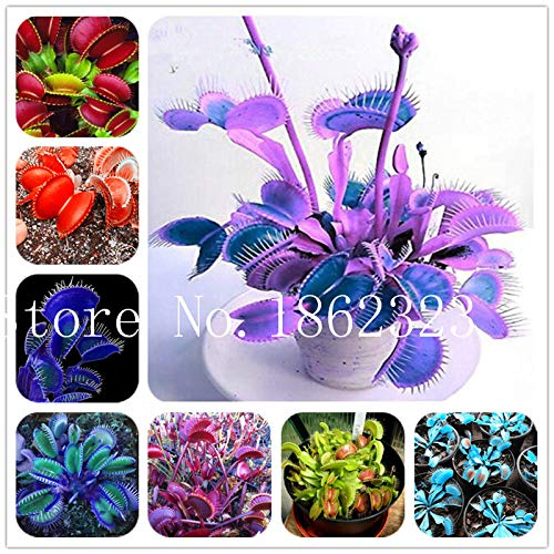 AGROBITS 150 Pcs Potted Insectivorous Plant Seeds Dionaea Muscipula Giant Clip Venus Flytrap Seeds Flower and Herbs Carnivorous Plant: Mixed