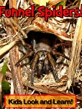 Australian Funnel Web Spiders! Learn About Australian Funnel Web Spiders and Enjoy Colorful Pictures - Look and Learn! (50+ Photos of Australian Funnel Web Spiders)