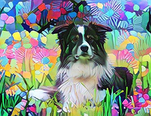 Border Collie Portrait (Border Collie Art - Dog Portrait Wall Decor Poster 8.5 x 11)