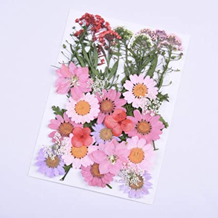 Real Pressed Dried Flowers,Mixed Multiple Pressed Flowers Leaves for Art Craft DIY