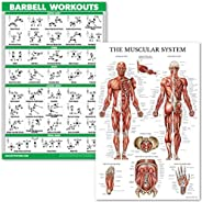 QuickFit Barbell Workouts and Muscular System Anatomy Poster Set - Laminated 2 Chart Set - Barbell Exercise Ro