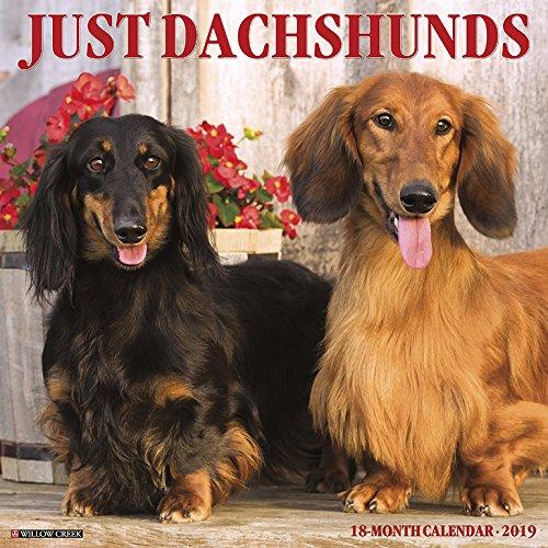 Just Dachshunds 2019 Wall Calendar (Dog Breed Calendar)