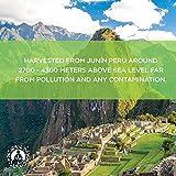 Maca Powder Organic - Peruvian Root Premium Grade