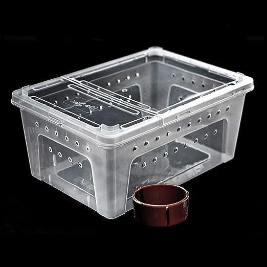 Xu-pet Las jaulas Transparentes Box, Vivarium Reloj de cría en ...