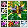 100pcs lily seeds,lily flower,(not lily bulbs),lilium flower seeds,Faint scent,bonsai pot plant for home garden plants mix
