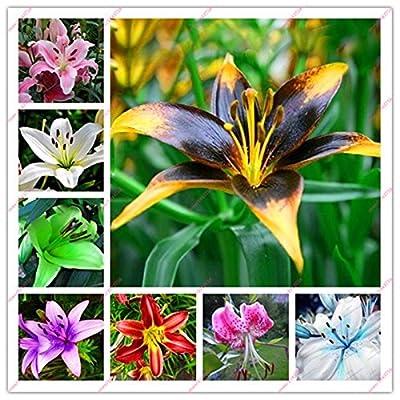 100pcs lily seeds,lily flower,(not lily bulbs),lilium flower seeds,Faint scent,bonsai pot plant for home garden plants mix